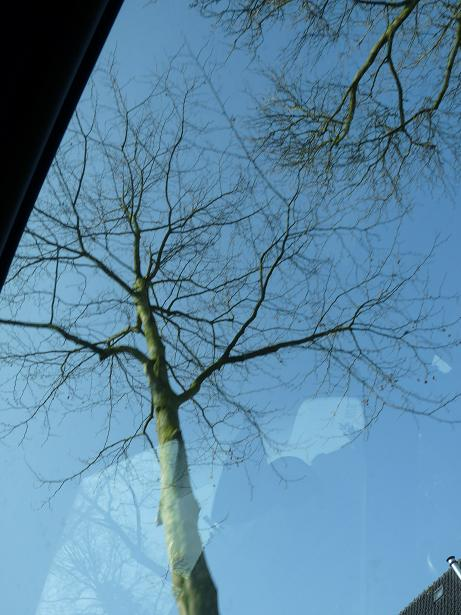 the tree with the blue sky